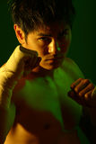 Boxer Series Stock Photography
