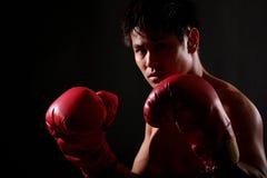 Boxer Series Stock Photos