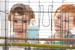 Boy children looking at pet budgerigar in cage Royalty Free Stock Photography