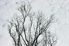 Branches and clouds Royalty Free Stock Photo