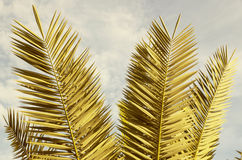 Branches of palm trees Stock Photos