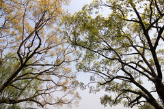 Branches of Trees Stock Photography