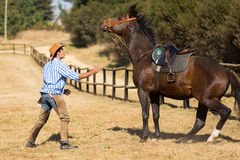 Breeder calm horse Stock Image