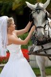 Bride with horses Stock Photo