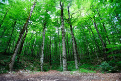 Bright green forest Stock Image
