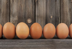 Brown Chicken Eggs Row Stock Images