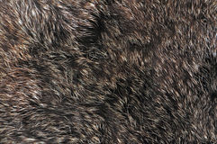 Brown fur texture Royalty Free Stock Photo