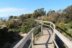 Bruny Island Bush Trail Stock Photos