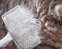 Brushing cat's fur Stock Image