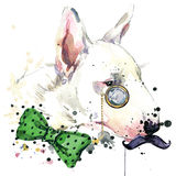 Bull Terrier dog T-shirt graphics. dog  illustration with splash watercolor textured  background. unusual illustration watercolor Royalty Free Stock Photo