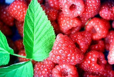 Bunch of raspberries in a punnet Royalty Free Stock Photos