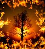 The Burning Bush Tree Stock Photo