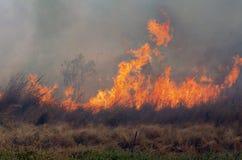 Bush Fire Stock Image