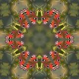 Butterfly mandala Royalty Free Stock Photo