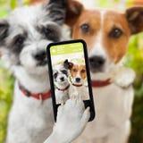 Cães de Selfie Fotos de Stock Royalty Free