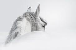 $c-andalusisch paard in een mist Stock Foto