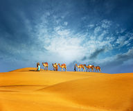 Camels travel through sand of desert dunes. Adventure journey Royalty Free Stock Images