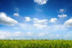 Campo di erba fresca verde sotto cielo blu Immagine Stock Libera da Diritti