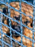 Captive Royalty Free Stock Photography