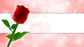 Cartão de aniversário com rosa do vermelho e quadro cor-de-rosa Fotografia de Stock
