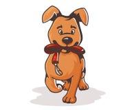 Cartoon dog with the collar Royalty Free Stock Photo