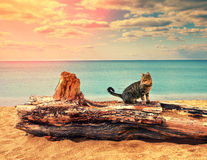 Cat on the beach Royalty Free Stock Photography