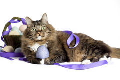 Cat with Easter Egg Stock Photos