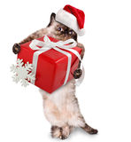 Cat in red Christmas hats with gift. Stock Image
