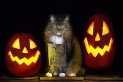 Cat with Trick or Treat Bag Stock Photos