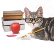 Cat Writing esperta com os livros no branco Fotos de Stock Royalty Free