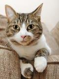 Cats eyes cat Royalty Free Stock Photo