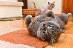 Cats having fun Royalty Free Stock Image