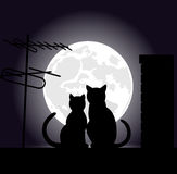 Cats on a night roof Stock Photography