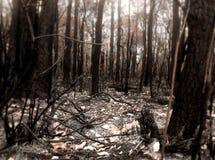 Cena do incêndio de Bush Foto de Stock
