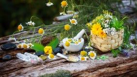 Chamomile, medicinal plants, homeopathy Stock Photos
