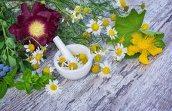 Chamomile, St. John's wort, Lady's mantle, peppermint ... Stock Photo