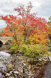 Charles River in Autumn Royalty Free Stock Photo