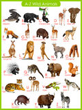 Chart of A to Z wild animals Royalty Free Stock Images