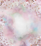 Cherry blossom flower oil painting Stock Images