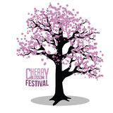 Cherry blossom tree isolated on white Royalty Free Stock Photos