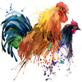 Chicken and rooster T-shirt graphics, chicken and rooster family illustration with splash watercolor textured background. illustra Stock Image