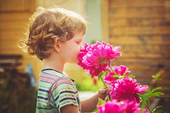 Child smelling bouquet of peonies, sun backlighting. Toning phot Stock Photos