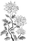 Chinese chrysanthemum. Ink painting Stock Images