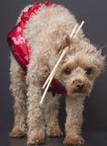 Chopstick Cutie Royalty Free Stock Photo