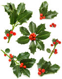 Christmas holly - green leaf, red berry, twig Royalty Free Stock Photos