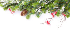 Christmas tree branch with snow Stock Photos