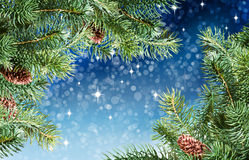 Christmas tree branches Royalty Free Stock Photography