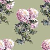 Chrysanthemum flower, bouquet, watercolor, pattern seamless Stock Image