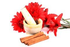 Cinnemon sticks Stock Image