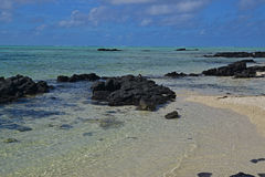 The clean clear transparent sea water off Ile aux Cerfs Mauritius with emerged black rocks and visible sandy beach Royalty Free Stock Photos